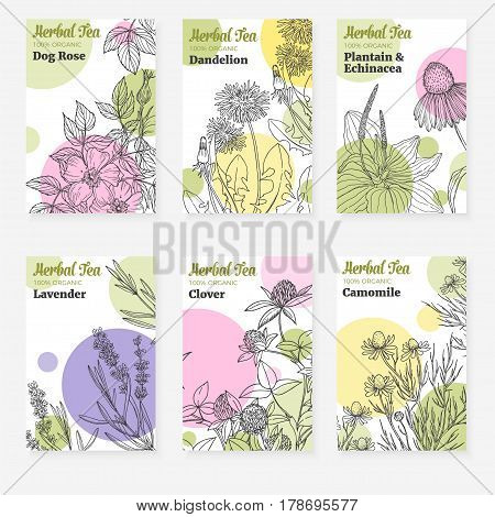 Six package templates for herbal tea or natural cosmetic, fresh modern design with white background, cards with botanical sketch of medicinal herbs and flowers, vector collection, dog rose, lavender, plantain, clover, chamomile, dandelion, echinacea