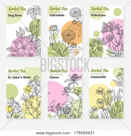 Package templates for herbal tea, fresh  modern design of cards with botanical sketch of medicinal herbs and flowers, vector collection, dog rose, calendula, st john's wort, clover, chamomile, valeriana