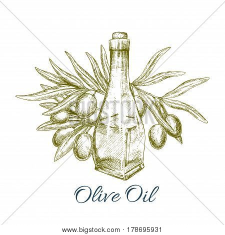 Olive oil with green olive fruits sketch poster. Glass bottle of virgin olive oil and olive tree branch with ripe fruit and leaves. Natural organic oil label, healthy vegetarian food recipe design