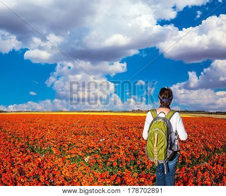 Woman - tourist with backpack admiring the floral field. Concept of rural and recreational tourism. The bright southern sun illuminates the fields of red garden buttercups