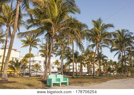 Park with coconut palm trees in Miami Beach. Florida United States