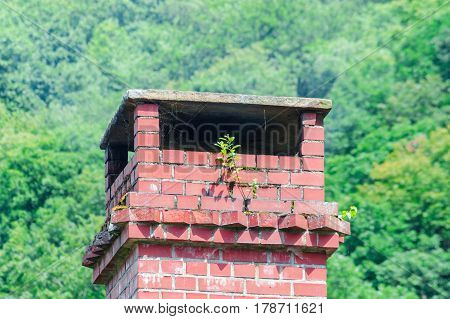 Chimney made of bricks on an old dirty roof. A tree grows from the fireplace.