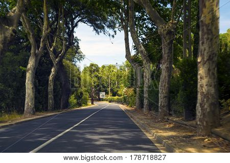 Road with the trees landscape near at Perpignan France.