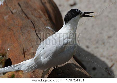 Seabird on a beach with a fallen log.