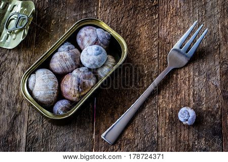 Snail shell and tin can on a wooden old table in an old kitchen