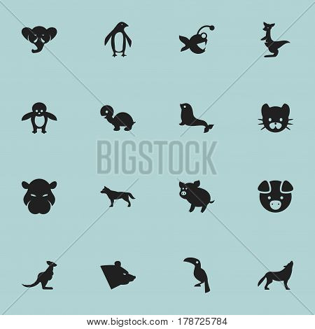 Set Of 16 Editable Zoology Icons. Includes Symbols Such As Hog, Swine, Kangaroo And More. Can Be Used For Web, Mobile, UI And Infographic Design.
