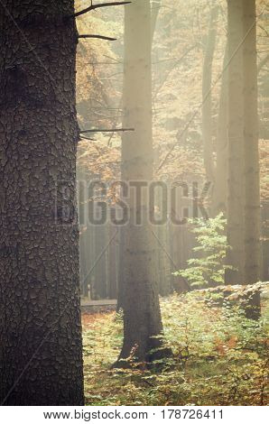 autumn forest in Czech Republic
