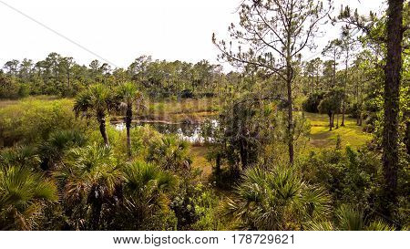 View of the bush and wetlands between palm trees on the sand under a blue sky on the Everglades in Florida USA