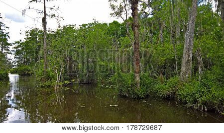 View of the bush in wetlands and water under blue sky in the Everglades in Florida USA