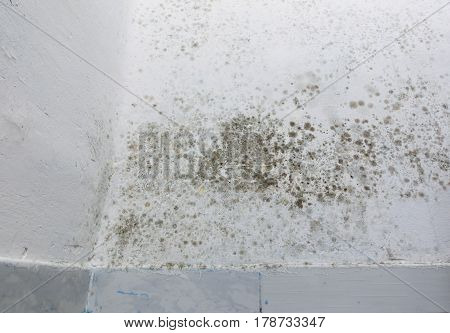 Detailed view of damp patches on a white wall over baseboard