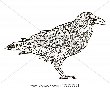 bird raven coloring book for adults vector illustration. Anti-stress coloring for adult. Zentangle style nature. Black and white lines. Lace pattern.