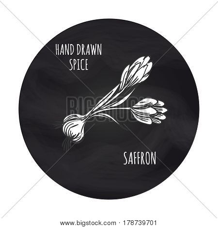 Hand drawn spice saffron in blackboard round. Vector saffron sketch icon design