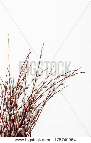 Branches and bouquet of willow isolated on white background.