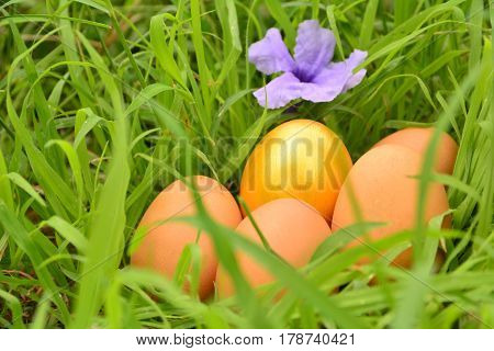 Fresh eggs with golden eeg and purple flower on grass background.