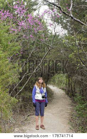 A Woman Enjoys the Pink Blossoms Overhead at the Cedar Ridge Preserve managed by Audubon in Dallas Texas.