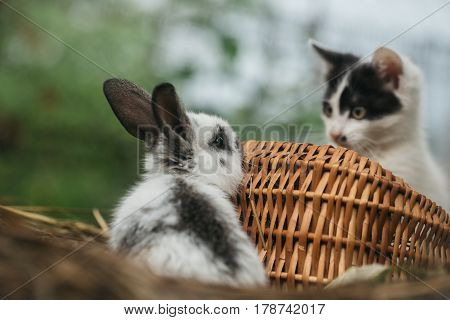 Cute Small Cat And Rabbit Playing Outdoors