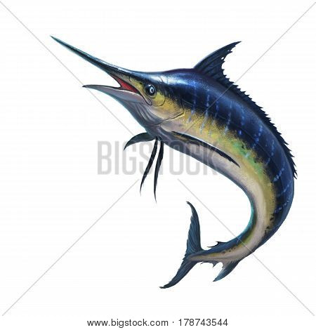 Blue marlin on white illustration isolated art