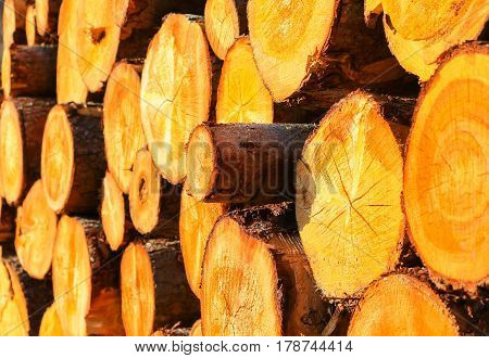 Stack of wood with logs in different sizes.