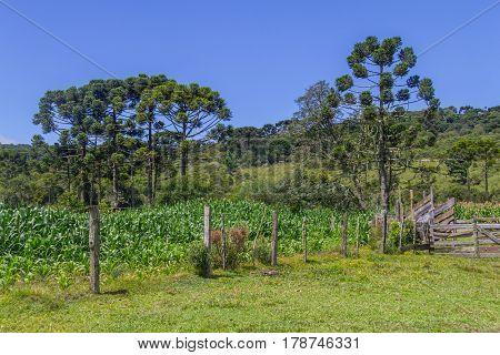 Iron Fence At Farm In Itaimbezinho Canyon
