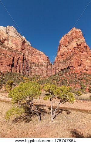 a scenic autumn landscape in Zion National Park Utah
