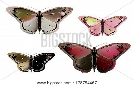Vintage mystical picture butterfly in scarlet colors on white background. Burgundy silk drape flowing and gold. set.