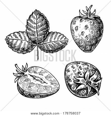 Strawberry vector drawing set. Isolated hand drawn berry, slice and leaf on white background. Summer fruit engraved style illustration. Detailed vegetarian food.