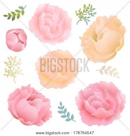 Flowers Peony
