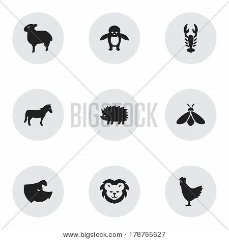Set Of 9 Editable Nature Icons. Includes Symbols Such As Porcupine, Crawfish, Sow And More. Can Be Used For Web, Mobile, UI And Infographic Design.