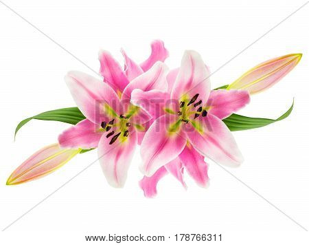 Collage of pink oriental stargazer lilies with flowers buds and leaves isolated on white.