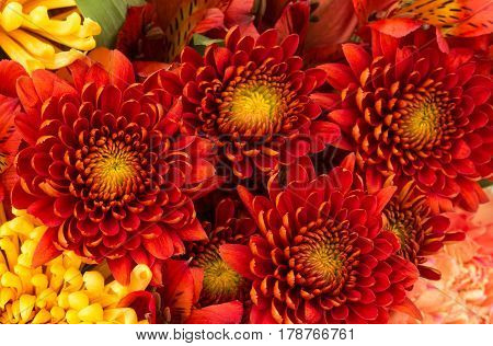 Flower arrangement background of mainly rusty red chrysanthemums with yellow spider mums alstroemeria and peach carnation on edges.