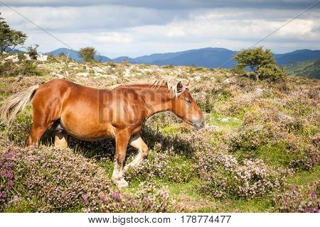 Exhibition brown horse in countryside, horse pasture summer mountains