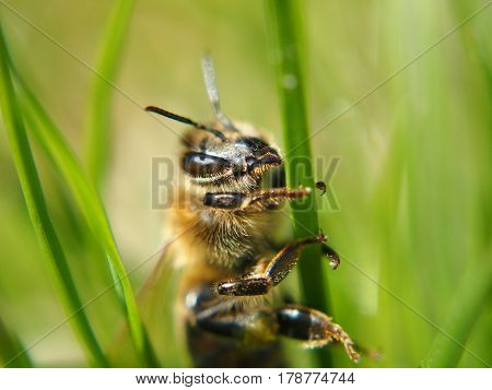 Extreme close up of bee sitting on flower