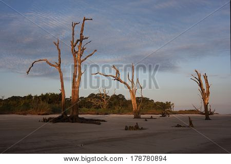 Dead trees remain upright on the beaches of Jekyll Island, Georgia at daybreak