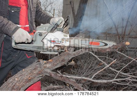 Chainsaw And Trees