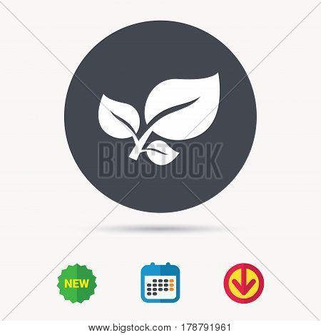 Leaf icon. Fresh organic product symbol. Calendar, download arrow and new tag signs. Colored flat web icons. Vector