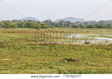 Scenic view of wetland in Yala National Park, Sri Lanka