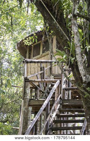 Wooden treehouse observation tower inside Kibale National Park Uganda.
