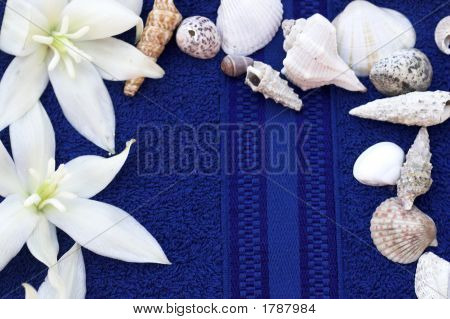Spa Flowers And Sea Shell On Blue