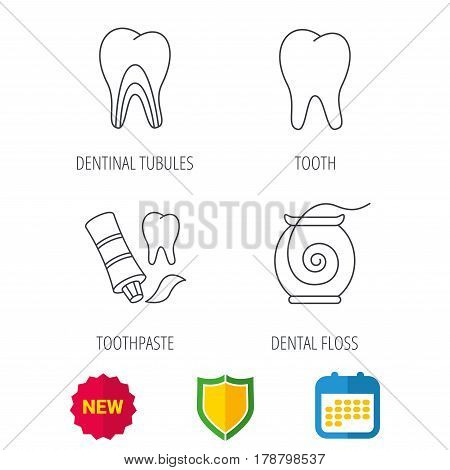 Tooth, dentinal tubules and dental floss icons. Toothpaste linear sign. Shield protection, calendar and new tag web icons. Vector