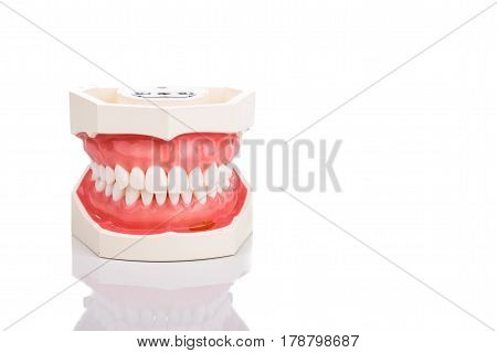 Dentist Orthodontic Teeth Model With Jaw Closed