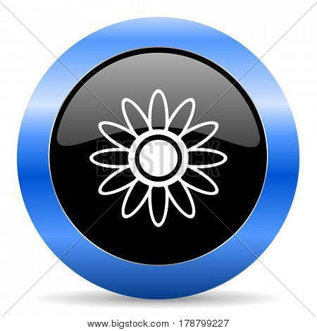 Flower black and blue web design round internet icon with shadow on white background.
