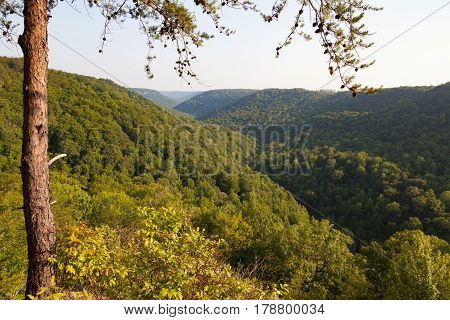 View of the Cumberland Plateau at Savage Gulf State Natural Area