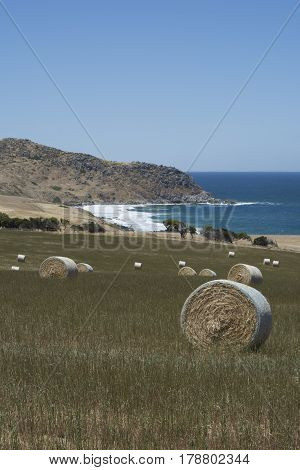 Field Hay Bales, Kings Beach, Fleurieu Peninsula, South Australia