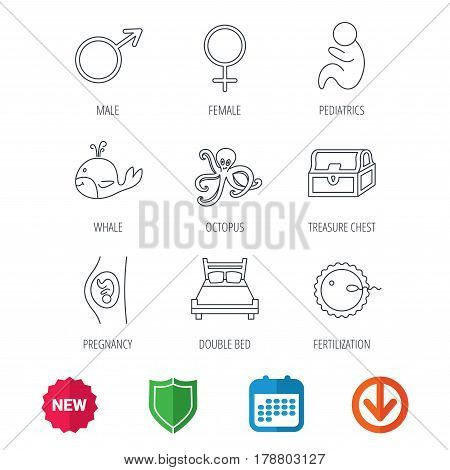 Fertilization, pregnancy and pediatrics icons. Baby child, whale and octopus linear signs. Treasure chest, double bed icons. New tag, shield and calendar web icons. Download arrow. Vector