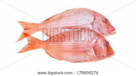 Fish And Seafood - Fresh snapper fish isolated on white.