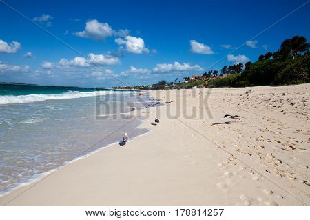 A beautiful view of the beach with seagulls and waves. New Providence, Nassau, Bahamas.