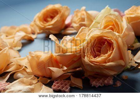 Selective focus on tender orange flowers