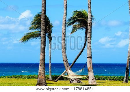 A tropical relaxing place with a perfect ocean view, hammock, and palm trees in the Bahamas. New Providence, Nassau, Bahamas.
