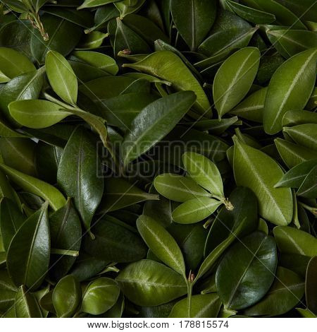 Tiny green leaves background. Natural background for postcard with copy space