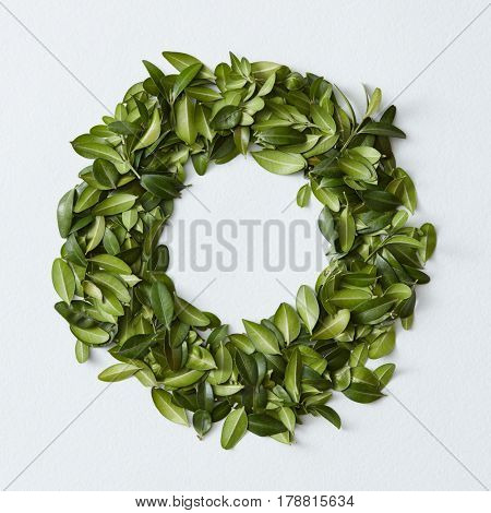Green leaves arranged in round shape on white background